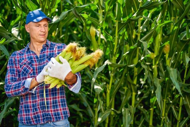 Fazendeiro homem com uma safra de milho.