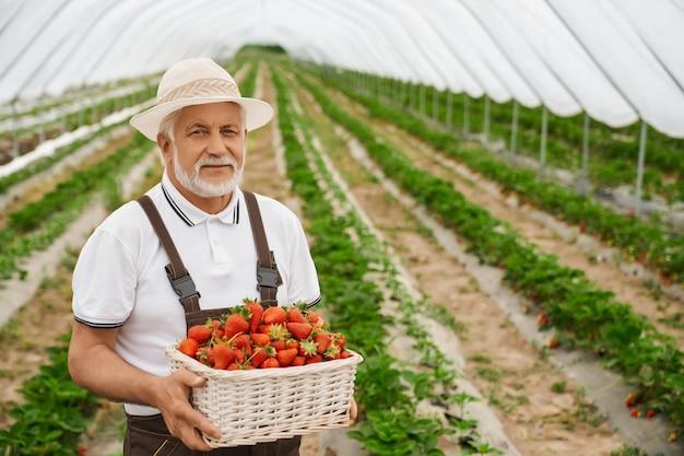 Fazendeiro idoso posando em uma estufa com uma cesta de morangos