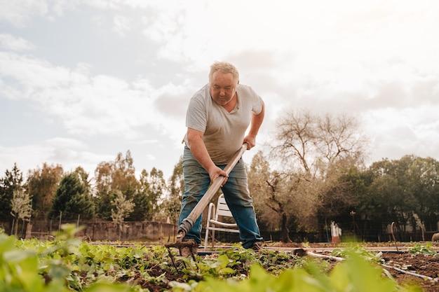 Fazendeiro na casa dos 50 anos limpando a terra com uma enxada para plantar batatas para vender
