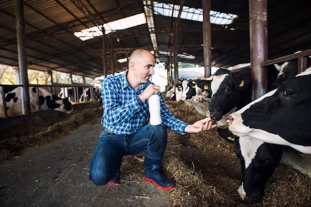 Fazendeiro na fazenda da vaca segurando uma garrafa de leite fresco enquanto as vacas comem feno no fundo