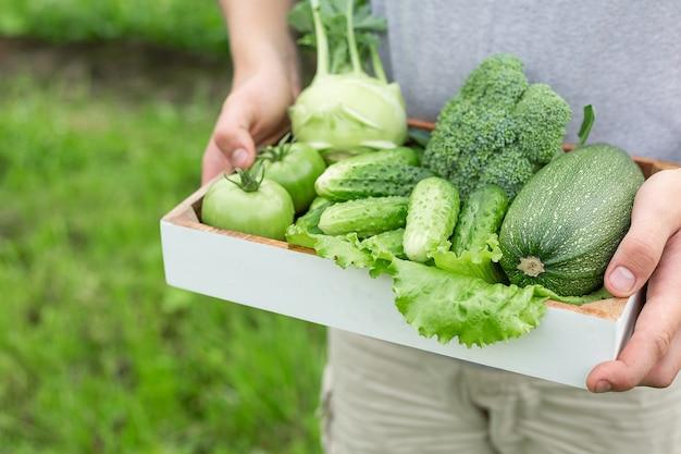 Fazendeiro que guarda a caixa com os vegetais orgânicos verdes.