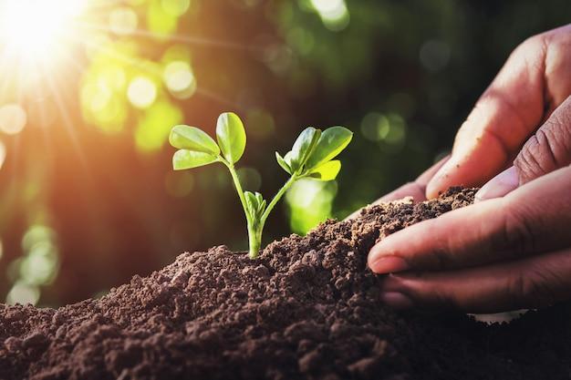 Fazendeiro que planta a árvore pequena com luz solar na natureza. conceito de agricultura
