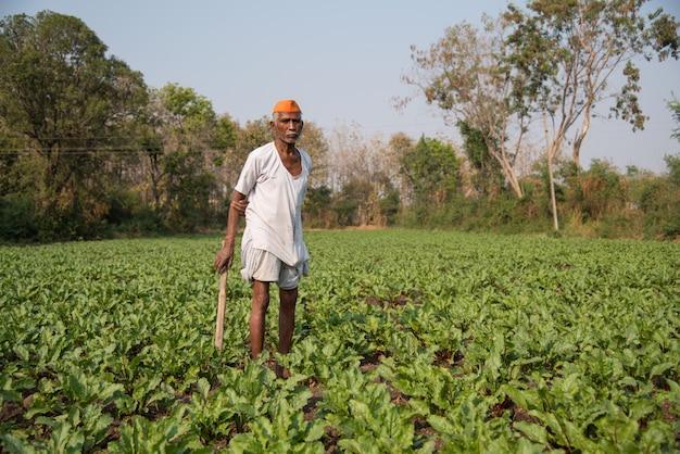 Fazendeiro que trabalha no campo de beterrabas, uma cena de agricultura rural indiana.