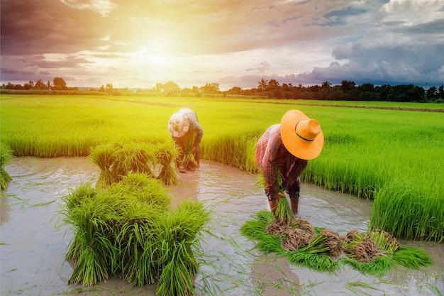 Fazendeiro trabalhando em fazenda com pôr do sol