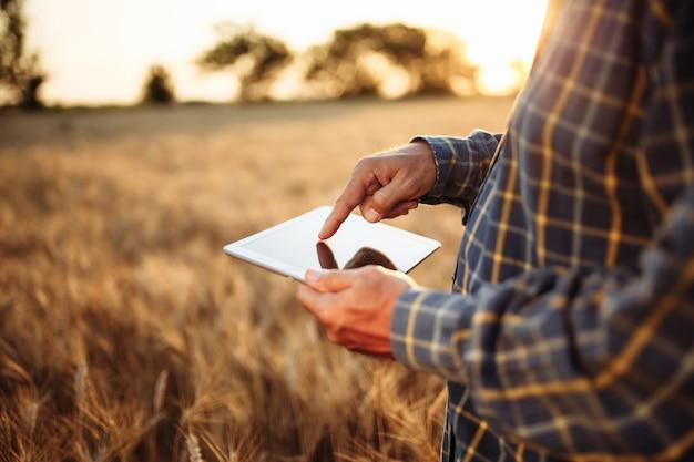 Fazendeiro verificando o andamento da colheita com a tabuinha no meio do campo de trigo dobrado