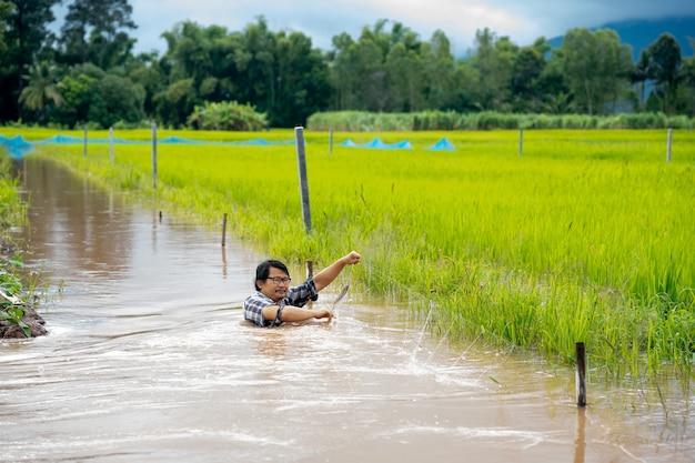 Fazendeiros pescam peixes na água da enchente em um arrozal