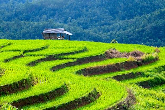 Fazendeiros tailandeses