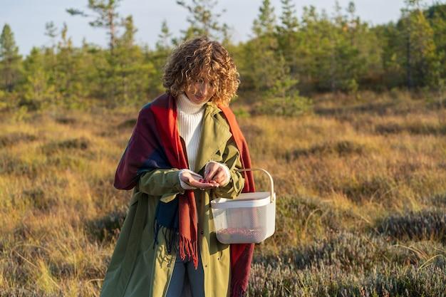 Fazendo colheita de cranberries no pântano, jovem segurando uma cesta e frutas vermelhas maduras nas mãos