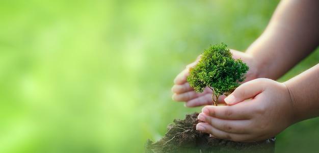 Fazendo csr plantando árvores, conceito de csr e negócios de plantio de mudas de árvores.