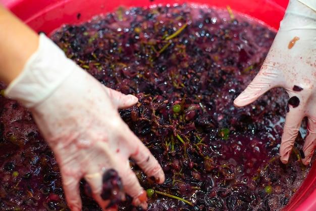 Fazendo vinho. mulher com as mãos enruga cachos de uvas em uma bacia. polpa de baga suculenta, foco seletivo.