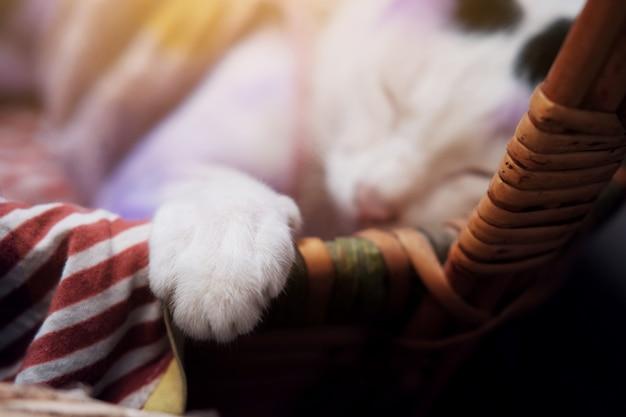 Fechado nas patas do gato branco tailandês bonito dormindo na cesta de madeira e aplique roxo para tratar doenças de pele do gato.