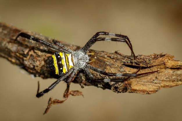 Fechar a aranha em um galho
