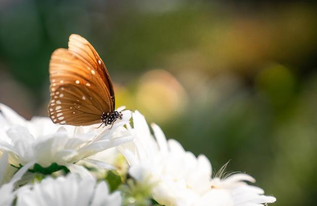 Fechar a borboleta na flor branca com espaço de cópia