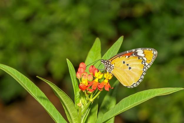Fechar a borboleta na natureza no parque