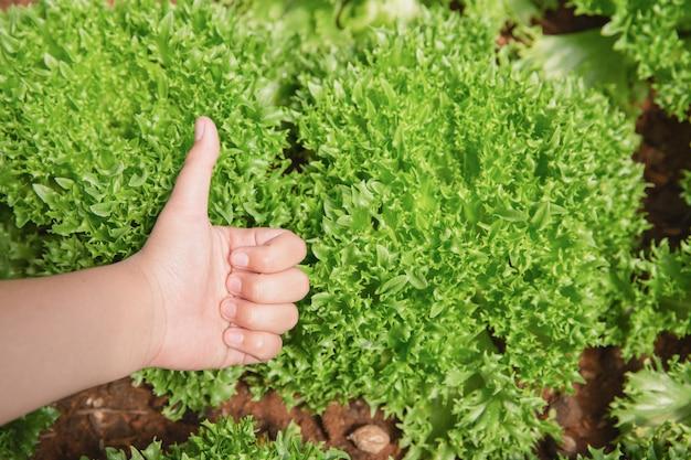 Fechar o agricultor de mão no jardim durante o fundo de comida de manhã