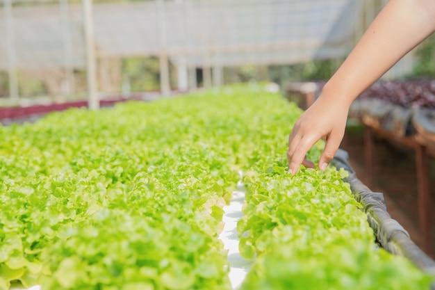 Fechar o agricultor de mão no jardim hidropônico durante fundo de comida de manhã