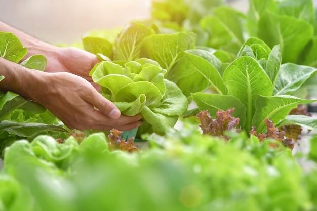 Fechar o agricultor de mão no jardim hidropônico durante o conceito de plano de fundo de comida de manhã