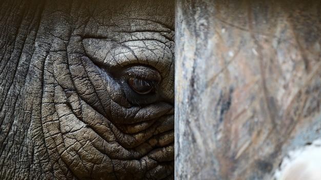 Fechar o olho do rinoceronte
