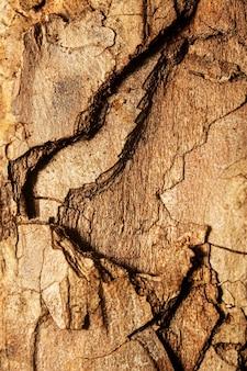 Fechar = textura de casca de árvore
