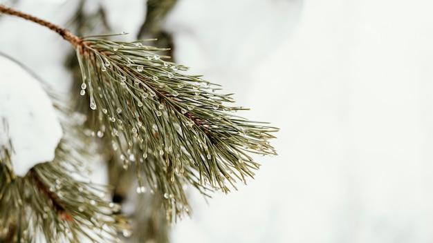 Feche a árvore com neve