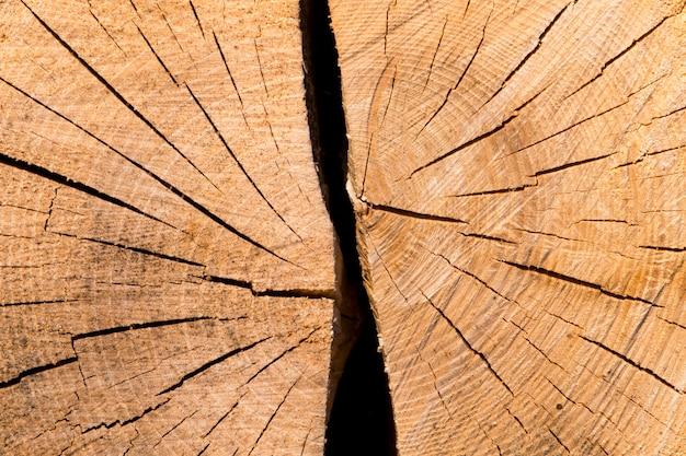 Feche a árvore principal do fundo do tronco de árvore cortado. dividido em duas partes