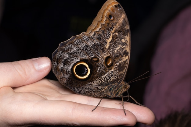 Feche a borboleta na mão da mulher. beleza da natureza.