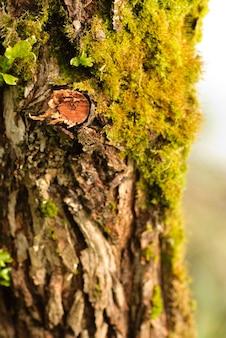 Feche a casca de árvore com musgo. dof raso
