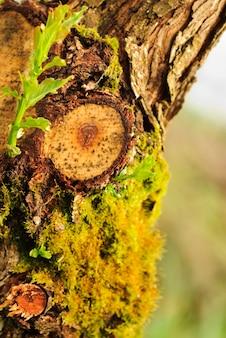Feche a casca de árvore com musgo. vida nova. dof raso