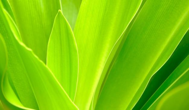 Feche a cor de folhas verdes e fundo de vegetação turva na natureza. conceito fresco de folha verde.