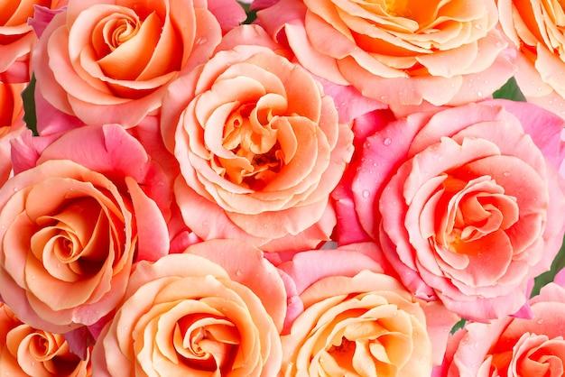Feche a florescência das flores frescas rosas naturais com gotas de água nas pétalas. vista do topo.