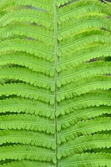 Feche a folhagem e as folhas verdes frescas da samambaia sobre o fundo verde, vista de baixo ângulo
