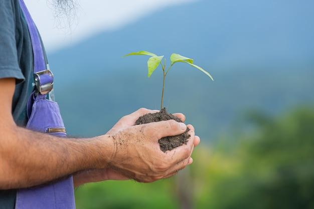 Feche a foto da mão do jardineiro segurando a muda da planta