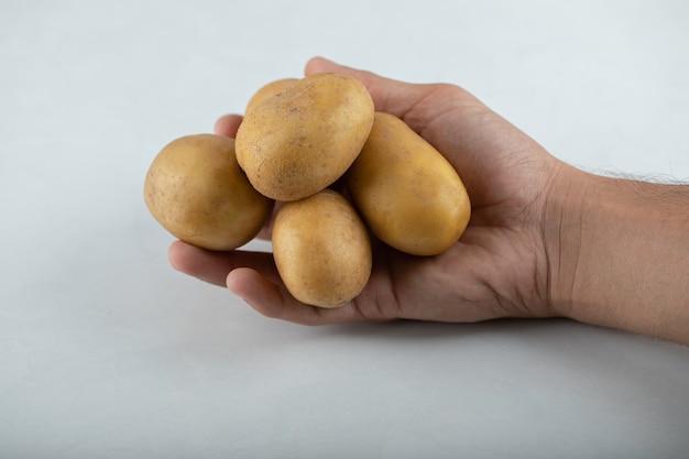 Feche a foto da mão masculina segurando a pilha de batatas no fundo branco.