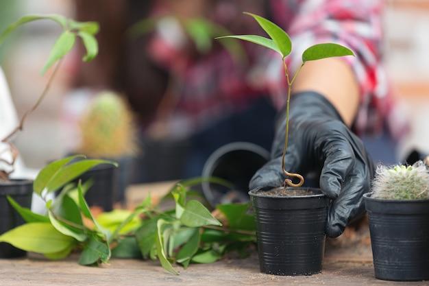 Feche a foto da mão segurando a planta