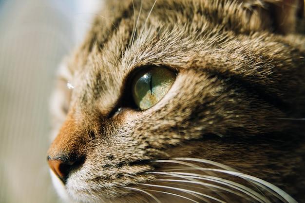 Feche a foto de um focinho de gato banhado pela luz do sol, olhando para longe.