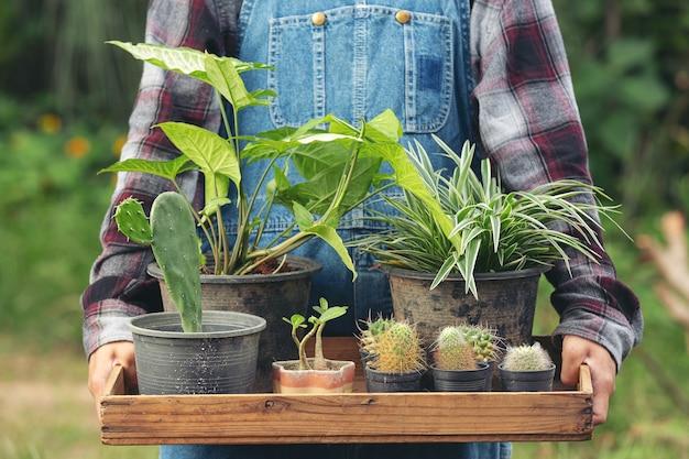 Feche a foto de uma mão segurando uma bandeja de madeira cheia de vasos de plantas
