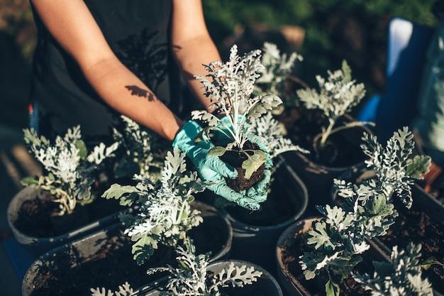 Feche a foto de uma mulher caucasiana envasando flores no jardim durante um dia ensolarado