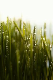 Feche a grama natural