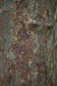 Feche a imagem da casca de árvore de plátano manchada para fundo verde