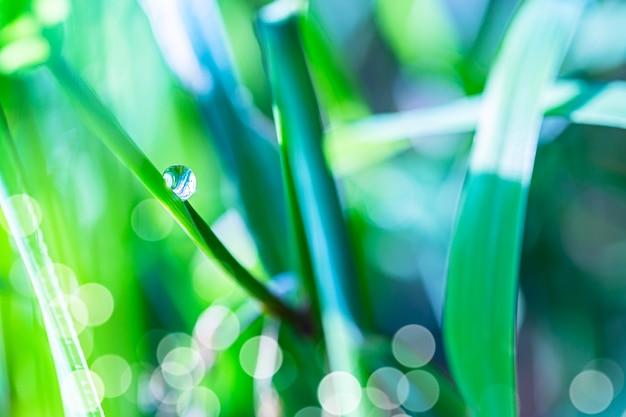 Feche a imagem macro de orvalho ou gota de chuva em uma folha de grama verde. fundo natural fantástico artístico da floresta de verão durante o nascer do sol.