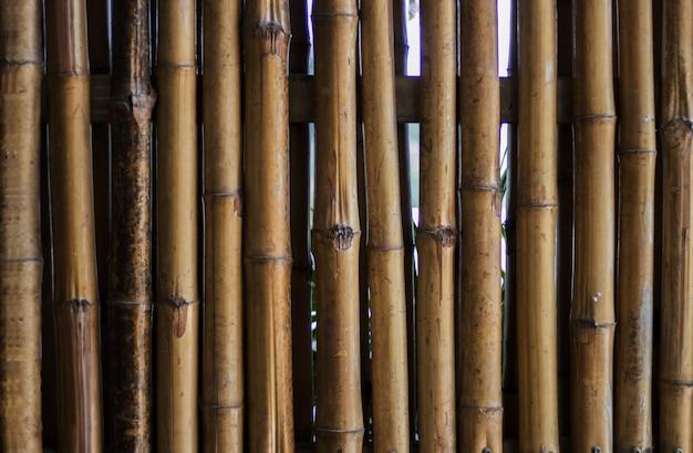 Feche a madeira de bambu crescida para o fundo