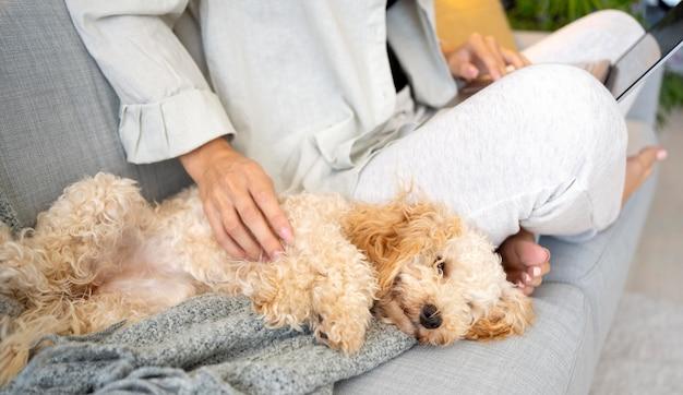 Feche a mão acariciando o cachorro dormindo