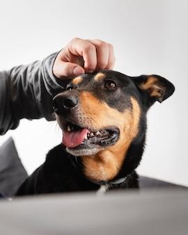Feche a mão acariciando o cachorro sorridente