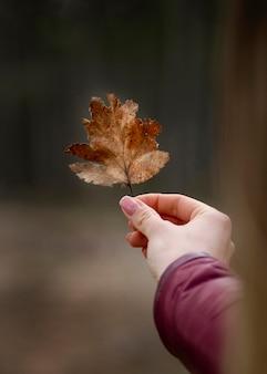 Feche a mão com a folha de outono