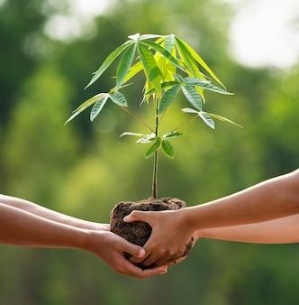Feche a mão de crianças ajudando a plantar árvores na natureza