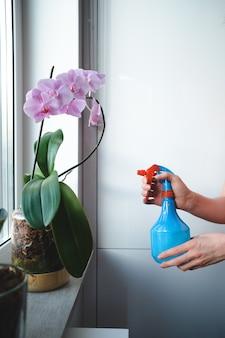 Feche a mão de uma mulher molhando uma árvore bonsai no apartamento