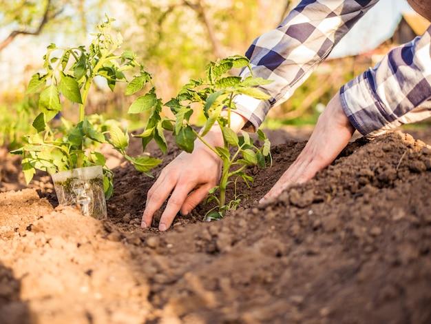 Feche a mão do homem a plantar plantas no jardim em um dia ensolarado
