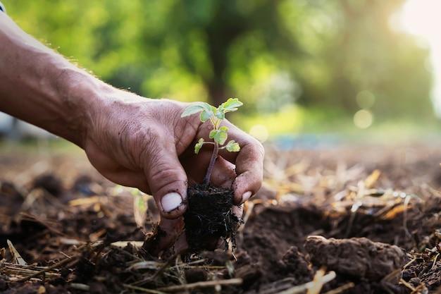 Feche a mão plantando tomate no jardim