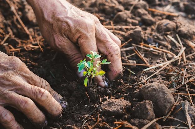 Feche a mão plantando tomate no jardim Foto Premium