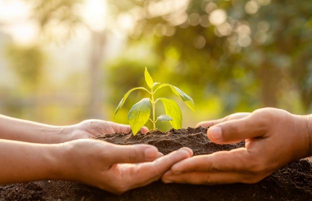 Feche a mão segurando o broto de árvore verde jovem e plantar no solo